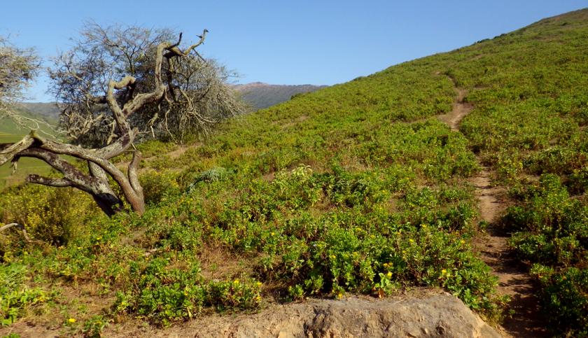 loma cahuamarca