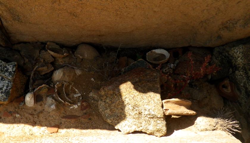 restos d conchas aiparipa