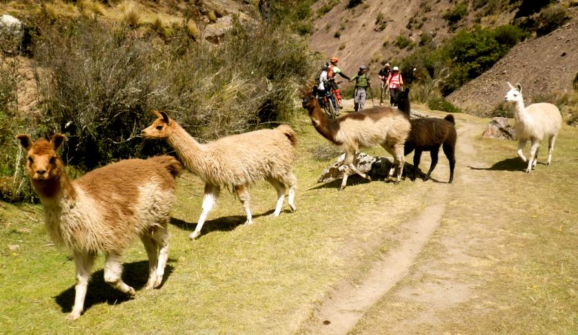 trekking en lares